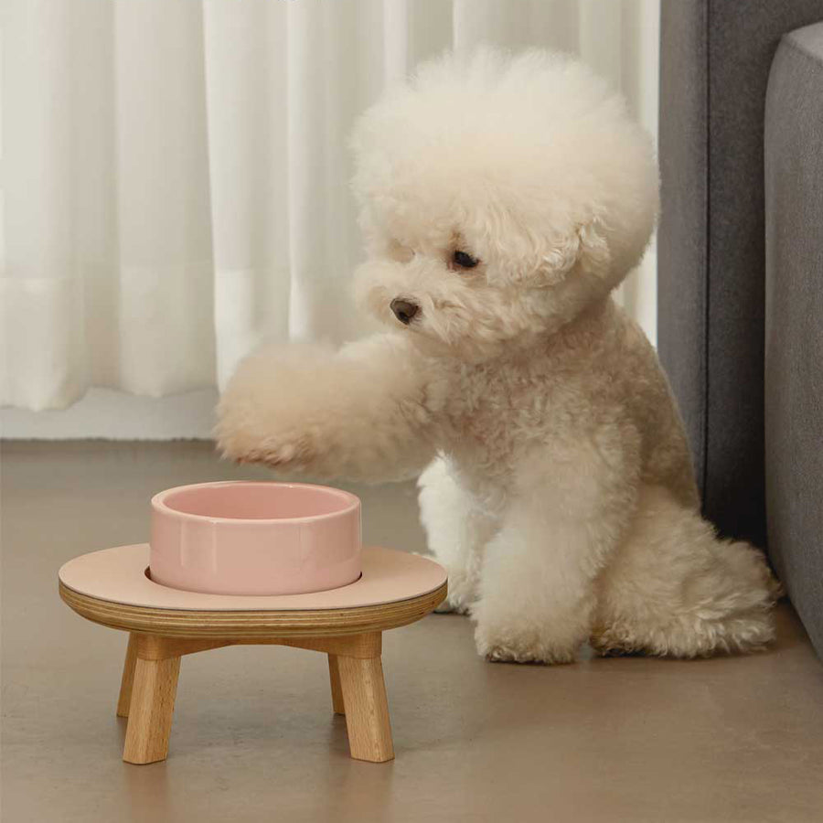 bichon with raised pet feeder bowl