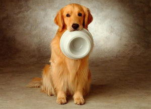 Is it good to feed the dog with an automatic feeder?