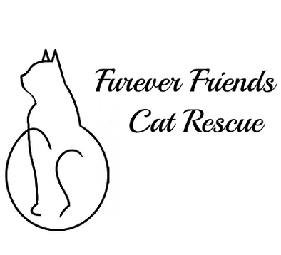 Furever Friends - Local Community Highlight