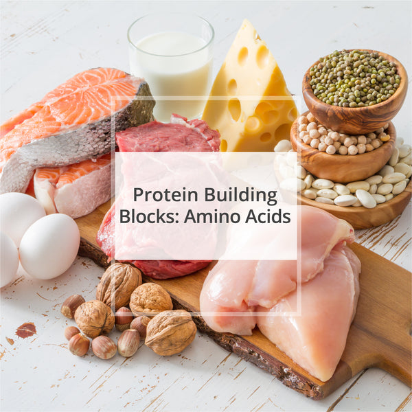 Protein Building Blocks: Amino Acids (NEW)