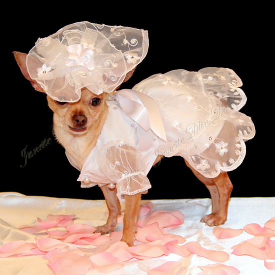 Elegant Dog Wedding Dress - Janette Dlin Design