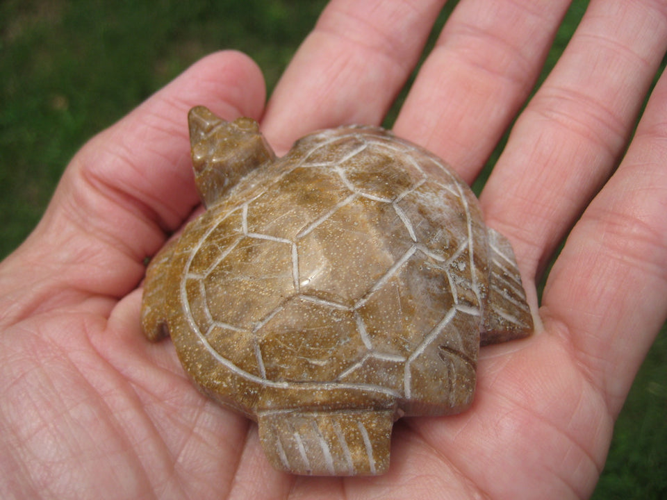 Natural Petrified Wood Turtle  Carving Statue Northern Thailand A367743