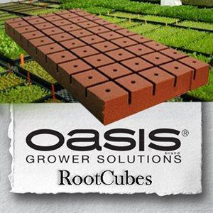 oasis-rootcubes-1-5-in-medium-cubes-5015-50-sheet