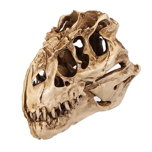 Resin Dinosaur Skull Fossils Teaching Skeleton Model Halloween Festival Decor