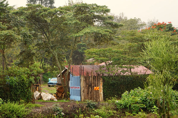 Single Origin Coffee estate in Nyeri County,  Kenya