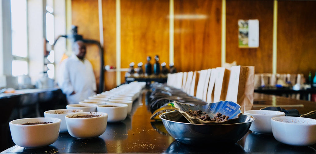 cupping single origin arabica green coffee in Kenya