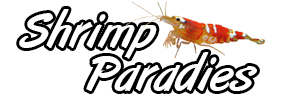 Shrimp Paradies