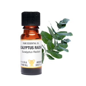 Eucalyptus Radiata Pure Essential Oil 10ml