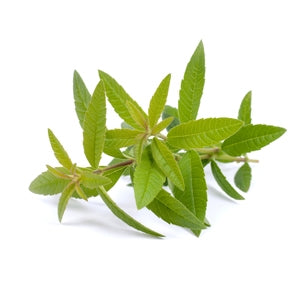 Lemon Verbena Pure Essential Oil