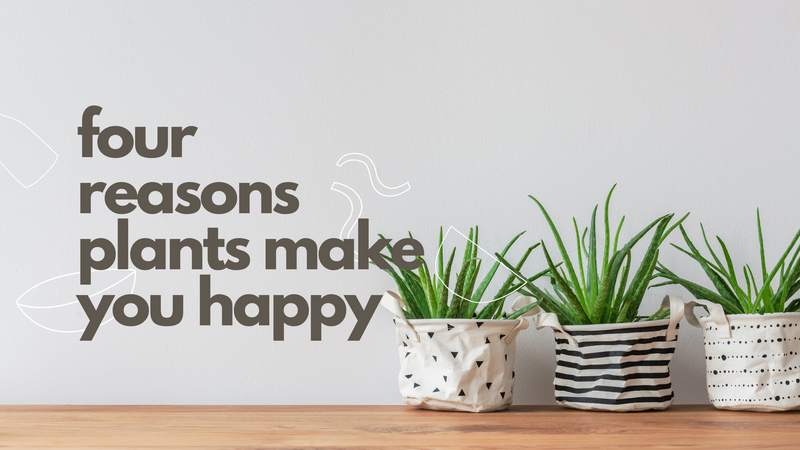 Four Reasons Plants Make You Happy!