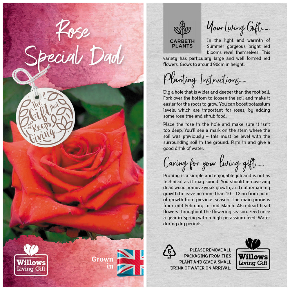 Special Dad Rose Bush