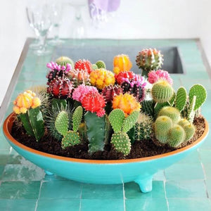 Succulent Cactus Mix - 200 Seeds