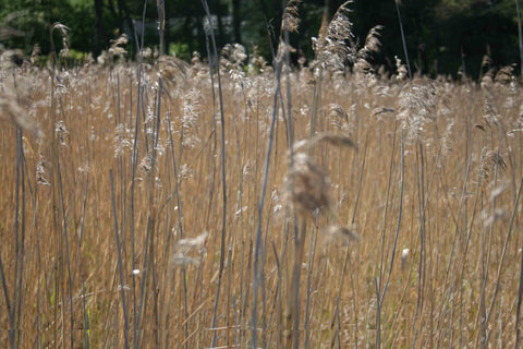 Lille_Clothing_sea_grass