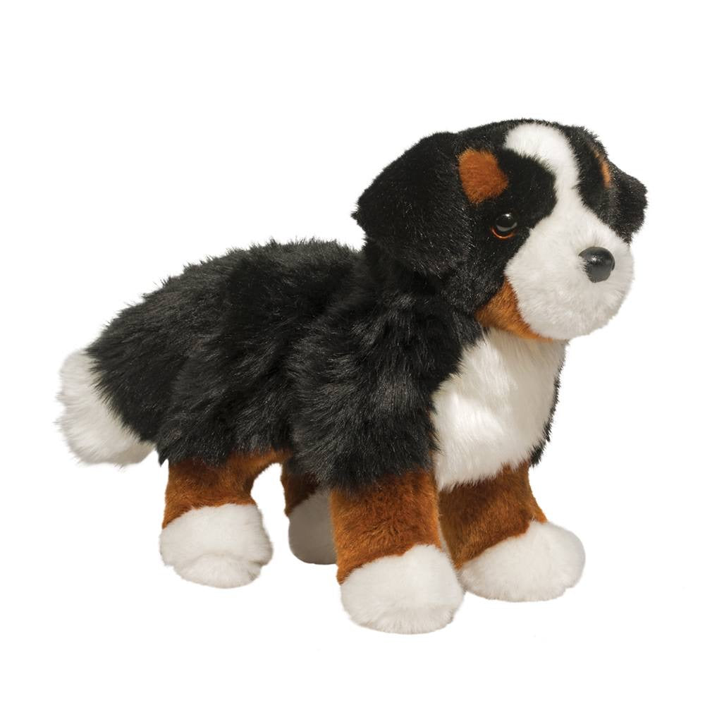 Stevie Bernese Mountain Dog