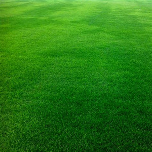 Super Shade LS Lawn Mix