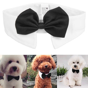 Gentleman Dog Bow Tie Collar