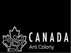 Canada Ant Colony