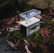 Load image into Gallery viewer, Tarheel Ants Mini Hearth - Canada Ant Colony
