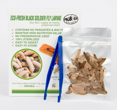 ProBugs Eco-Fresh Black Soldier Fly Larvae - Canada Ant Colony