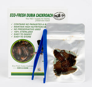ProBugs Eco-Fresh Dubia Cockroach - Canada Ant Colony