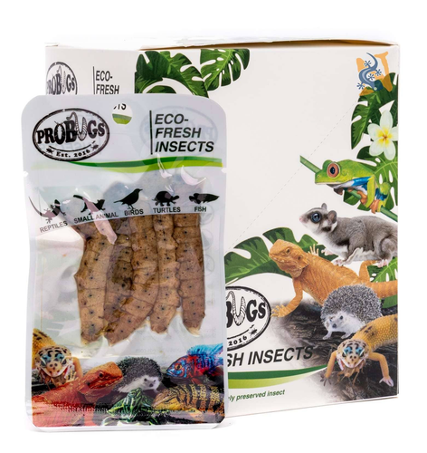 ProBugs Eco-Fresh Silkworms - Canada Ant Colony