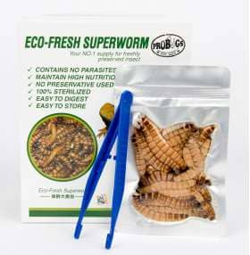 ProBugs Eco-Fresh Superworms - Canada Ant Colony