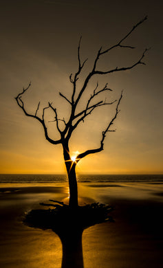 Golden Light Tree