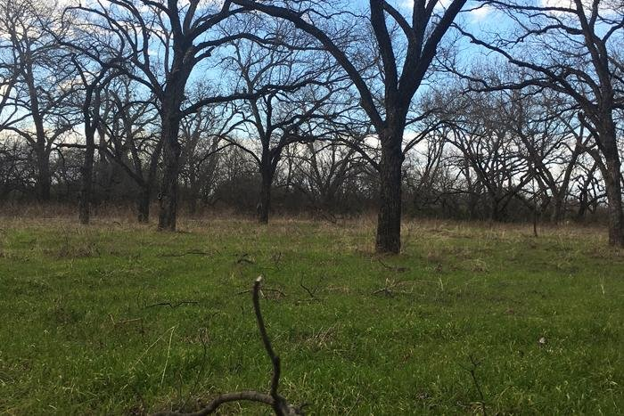 Conserving the environment and pecan trees