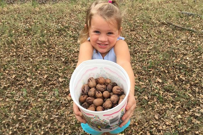 Picking pecans on our family outing bucket of pecans