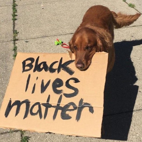 Dogs for Viral in Support of #BlackLivesMatter
