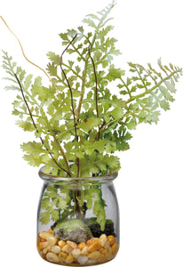 Small Maidenhair Fern In Jar