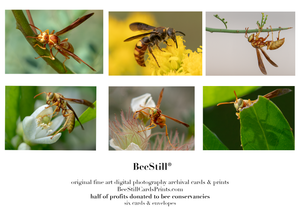 6 card set golden paper wasps scoliid wasp