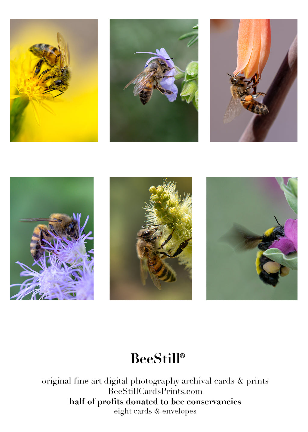 set of 6 archival cards: Honey Bees & Sonoran Bumblebee s-08