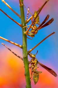 Branch of Life: 2 Golden Paper Wasps, 1 Ant, Red Bird of Paradise v-68