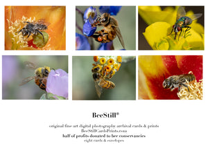 set of 6 archival cards: Cactus Woodborer Bees, Honey Bees & Green Bottle Fly s-09