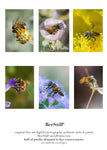 set of 6 archival cards: Honey Bees & Cactus Woodborer Bee s-02