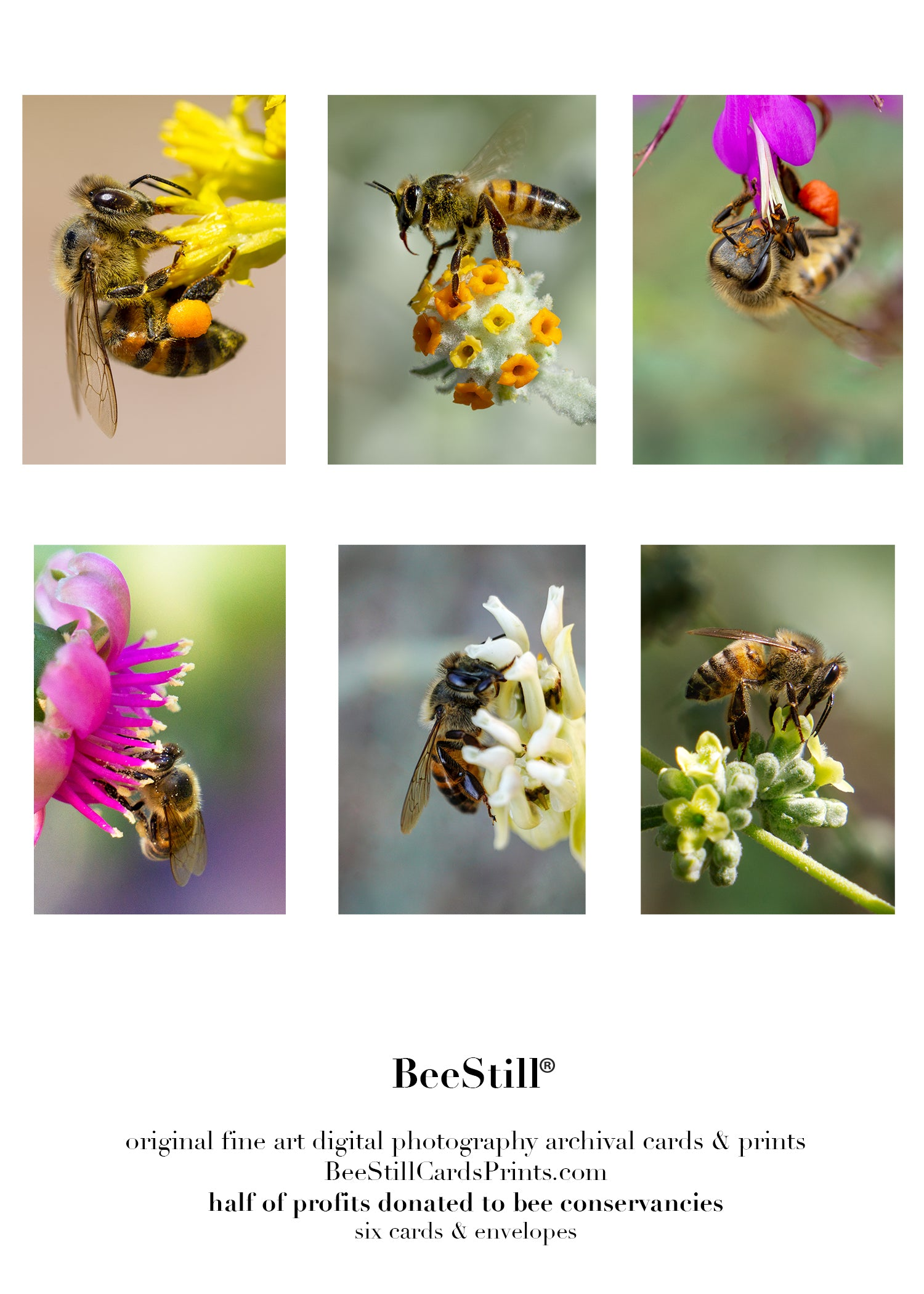 set of 6 archival cards: Honey Bees s-04
