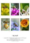 set of 6 archival cards: Honey Bees s-05