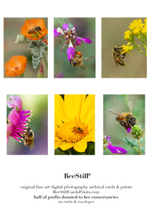 set of 6 archival cards: Honey Bees s-06