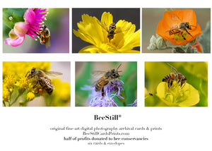 set of 6 archival cards: Honey Bees & Flower Fly s-07