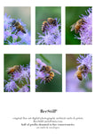 set of 6 archival cards: Honey Bees, Blue Mistflower s-10