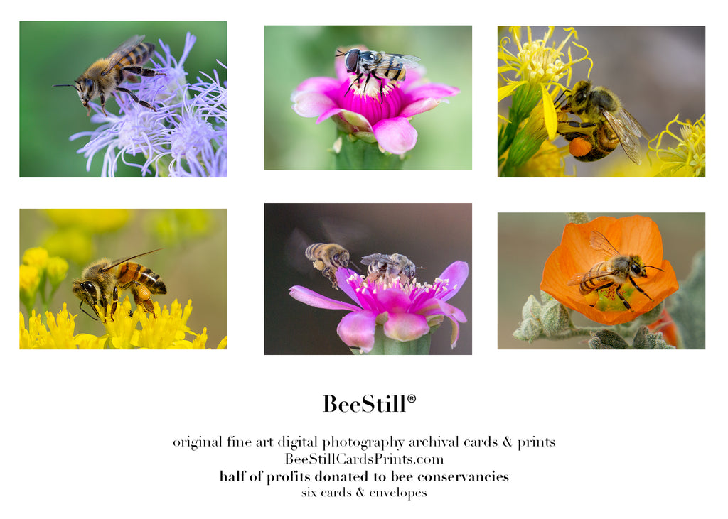 set of 6 archival cards: Honey Bees, Flower Fly, Digger Bee s-01
