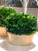Preserved Boxwood Oval Topiary