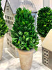 Preserved Boxwood Cone Tree Small