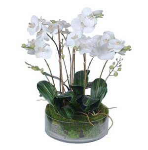 Orchid Phal in Glass Bowl