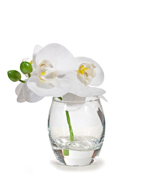 Orchid Phalaenopsis in Vase 15cml White