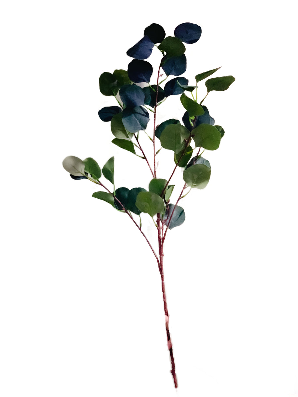 Eucalyptus Spray Branch