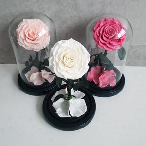 Infinite Rose | Mini Rose Dome in White | Roses That Last A Year