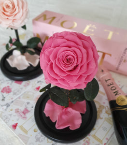 Infinite Rose | Mini Rose Dome in Pink | Roses That Last A Year