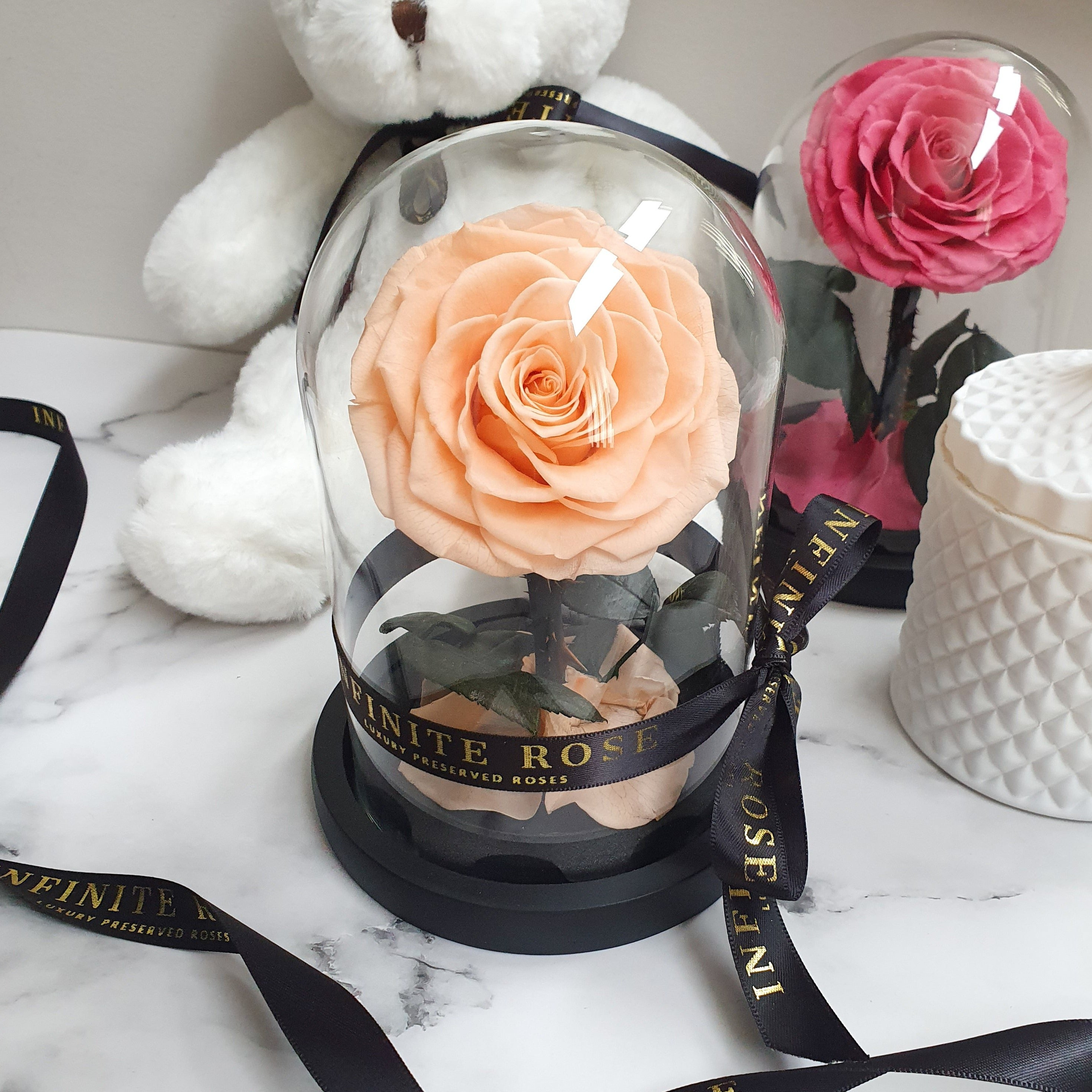 Infinite Rose | Petite Rose Dome in Peach | Roses That Last A Year